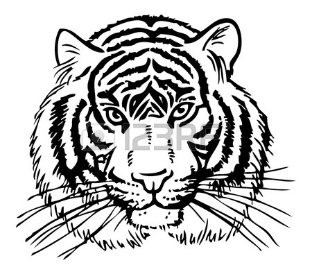 450x395 Tiger Drawing Stock Photos. Royalty Free Business Images