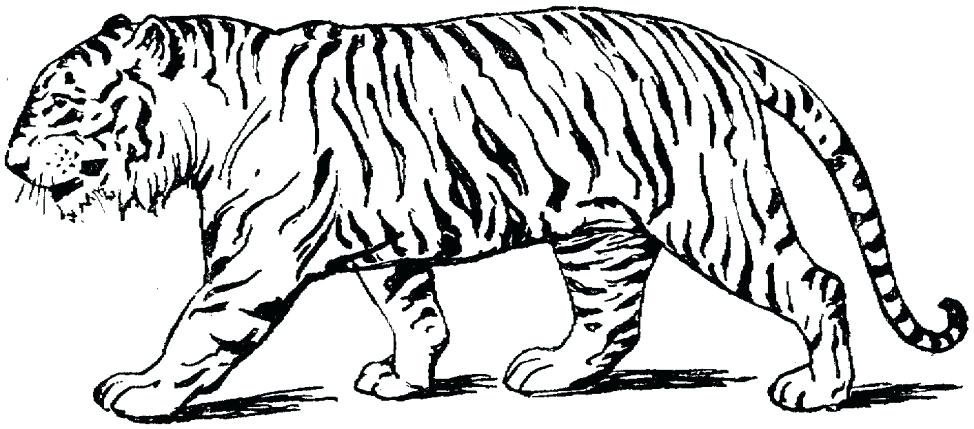 974x429 Coloring Pages Of Tigers