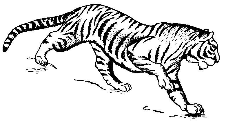 780x427 Tiger Drawing