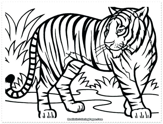 618x470 Tiger Cub Coloring Pages Amazing On Picture Page
