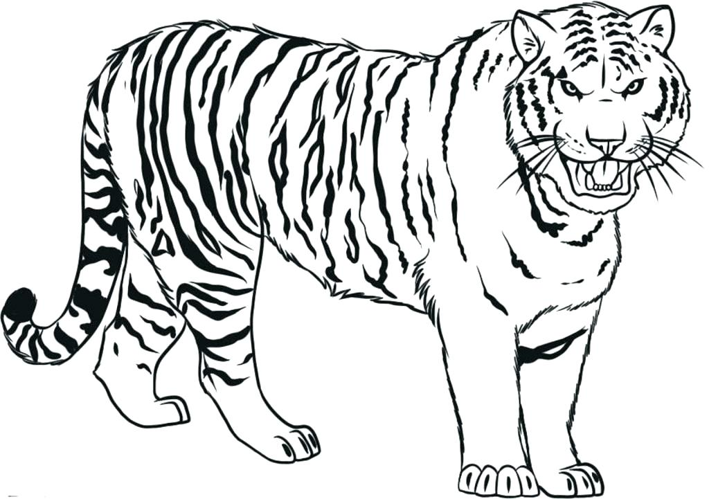 tiger coloring pages for kids - tiger drawing pictures at free for