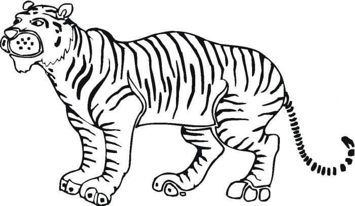 700x408 Tiger Outline