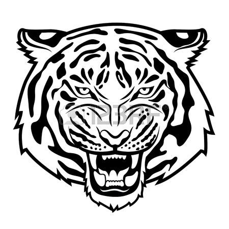Tiger Head Drawing