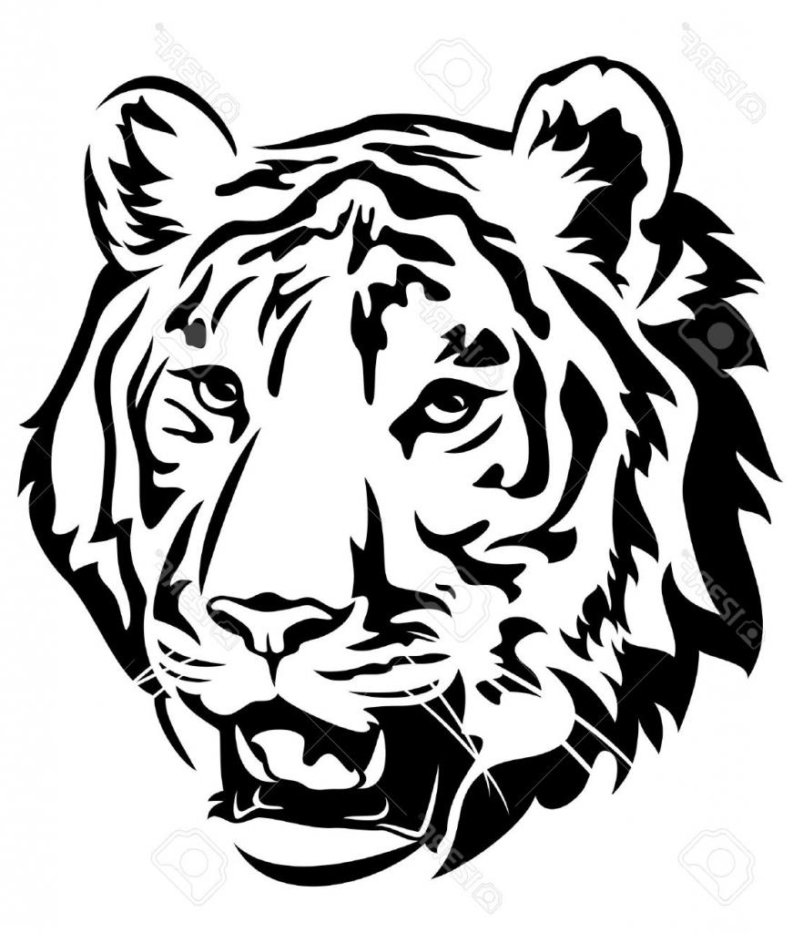 Tiger Head Drawing at GetDrawings | Free download