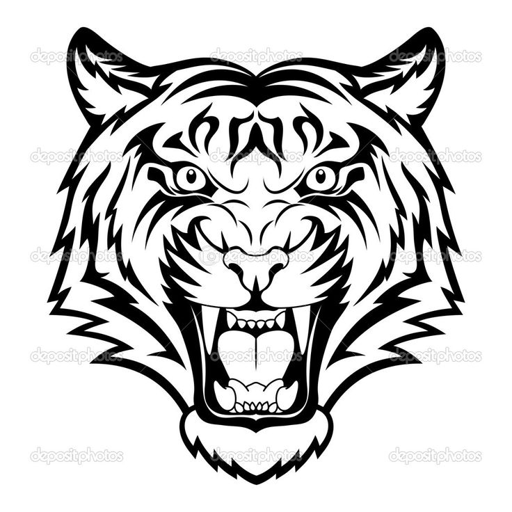 Tiger Images Drawing