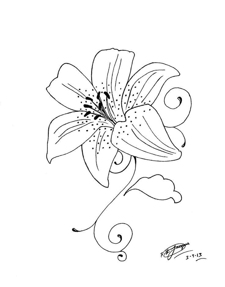 Tiger Lilies Drawing at GetDrawings | Free download