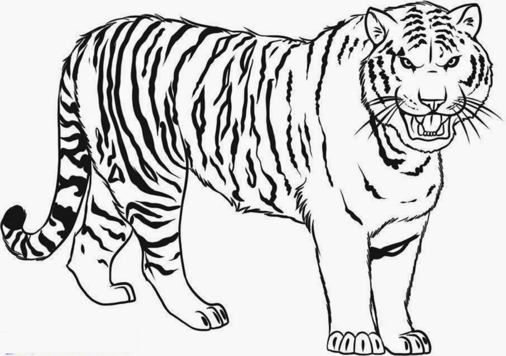 Tiger Line Drawing Easy : Tiger line drawing at getdrawings free for personal