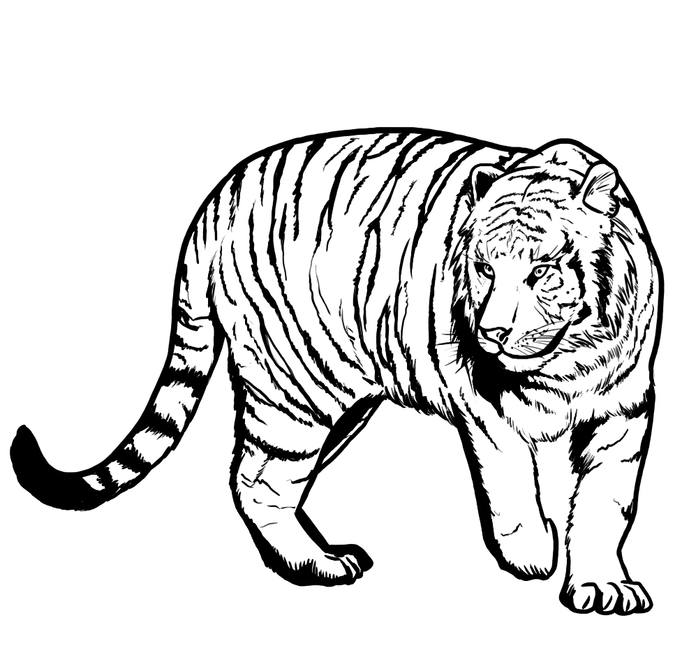 bangel tiger coloring pages - photo#30