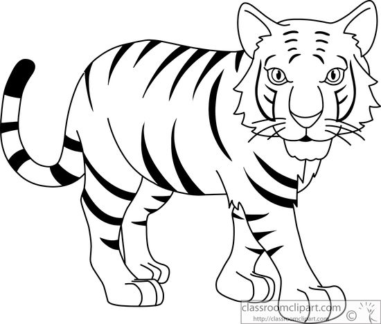 550x468 Tiger Clipart Drawing