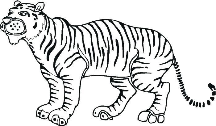 700x408 Tiger Outline Tiger Outline Drawing Best Tiger Face Outline Tattoo