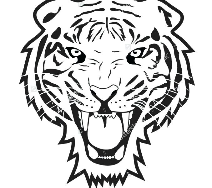 678x600 Tiger Pictures To Print Drawing And Coloring A Tiger How To Draw