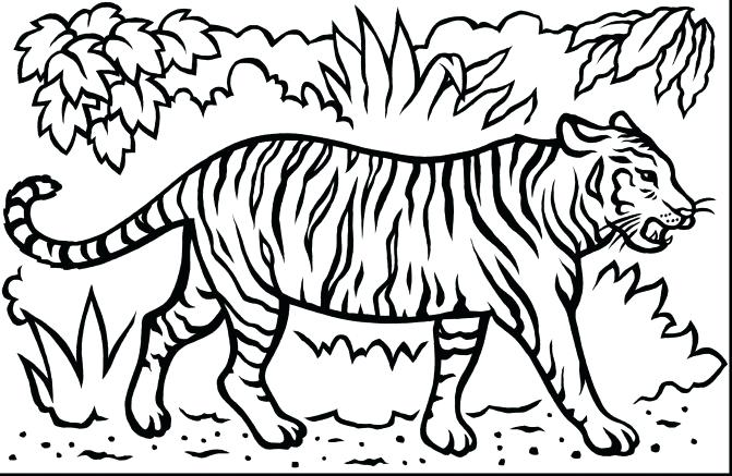 671x437 Coloring Pages Of Tigers Medium Size Colouring