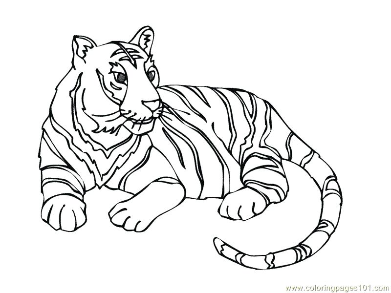 800x600 Coloring Picture Of Tiger Tiger Shark Coloring Pages Luxury Tiger