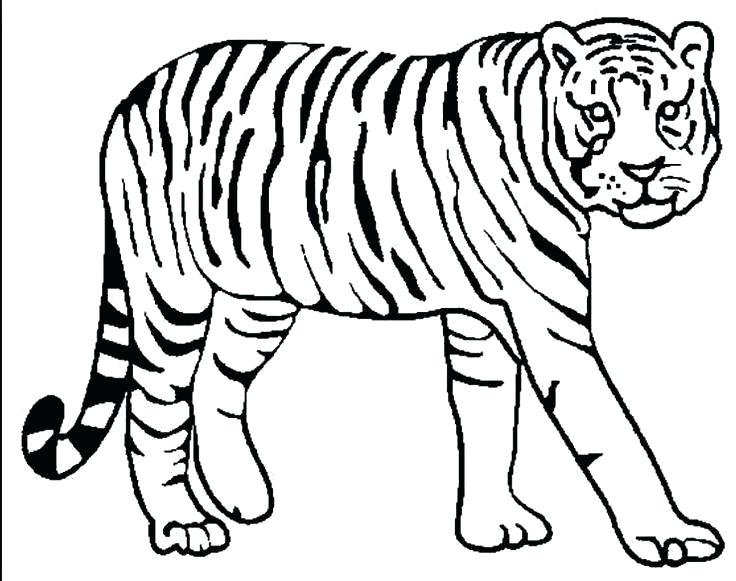 736x581 Tiger Printable Coloring Pages Tiger Template Kids Drawing Tiger
