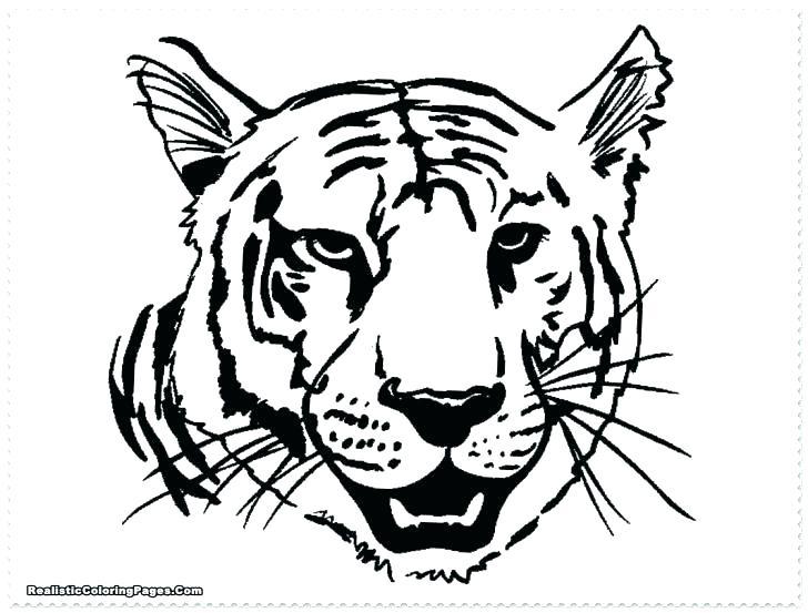 Tiger Paw Drawing At GetDrawings