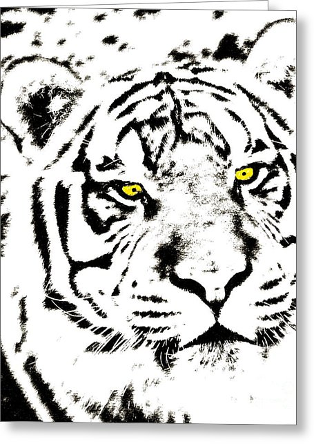 455x646 Golden Eyed Tiger Pen And Ink