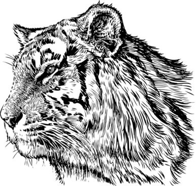 387x368 Hand Drawing Tiger Vector Free Vector In Adobe Illustrator Ai