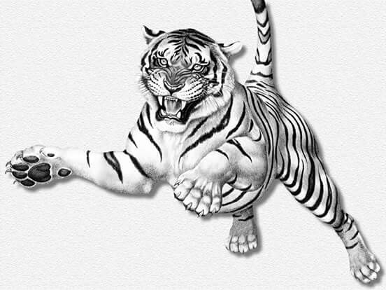 Tiger Pen Drawing at GetDrawings com | Free for personal use