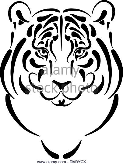 404x540 Tiger Hunting Black And White Stock Photos Amp Images