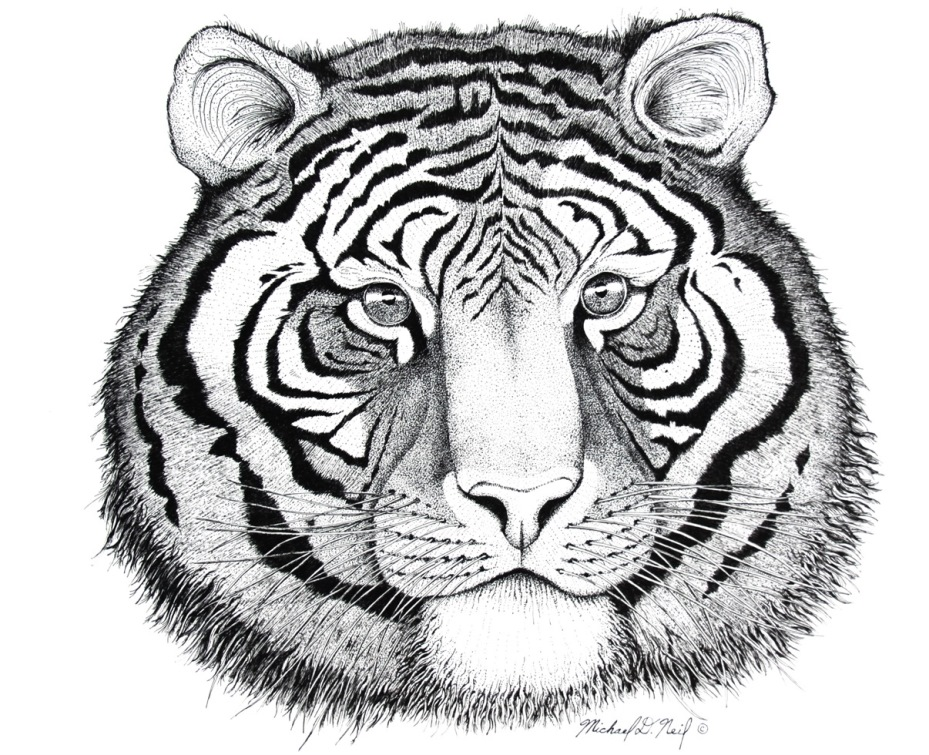 929x755 Tiger Pen And Ink.aa Senior Chaplain Mike Neil