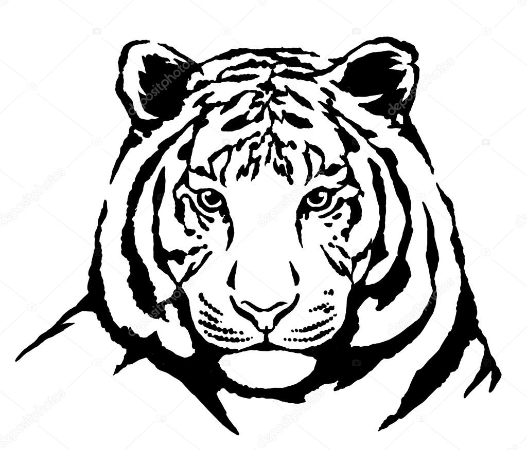 1024x876 Black And White Ink Draw Tiger Illustration Stock Photo