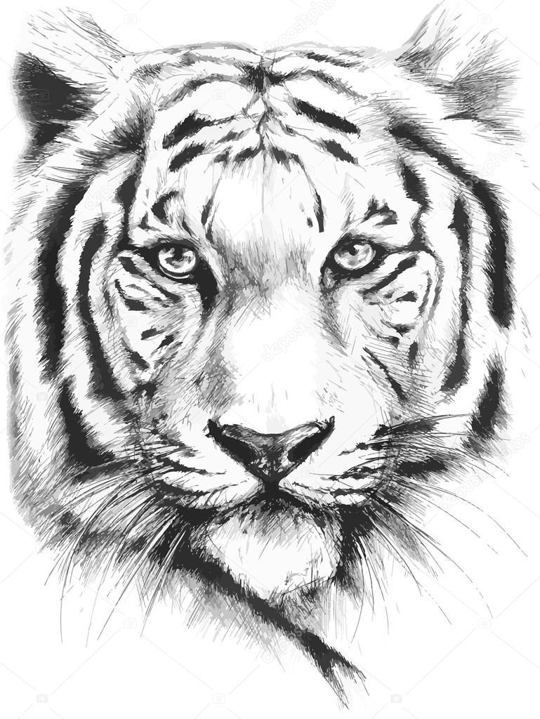 769x1024 Tiger Stock Vector Tig A@bk.ru