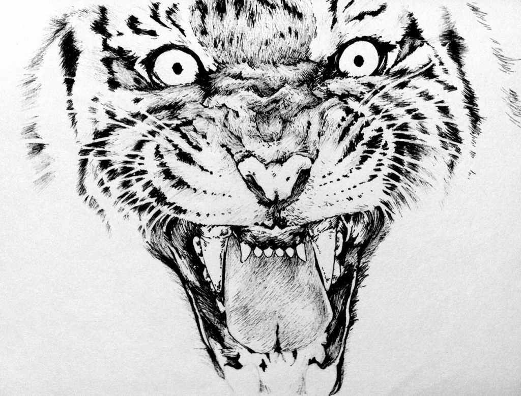 1024x779 Drawing Pictures Animals With Pen Tiger Fineliner Pen Drawing Yun