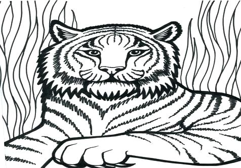 476x333 Tiger Coloring Pages Tiger Coloring Pages With Tiger Coloring Page