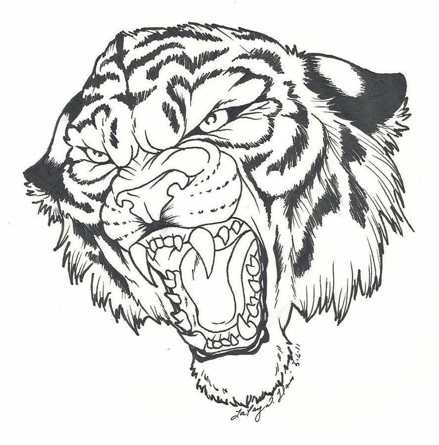 tiger roar drawing at getdrawings | free for personal use tiger