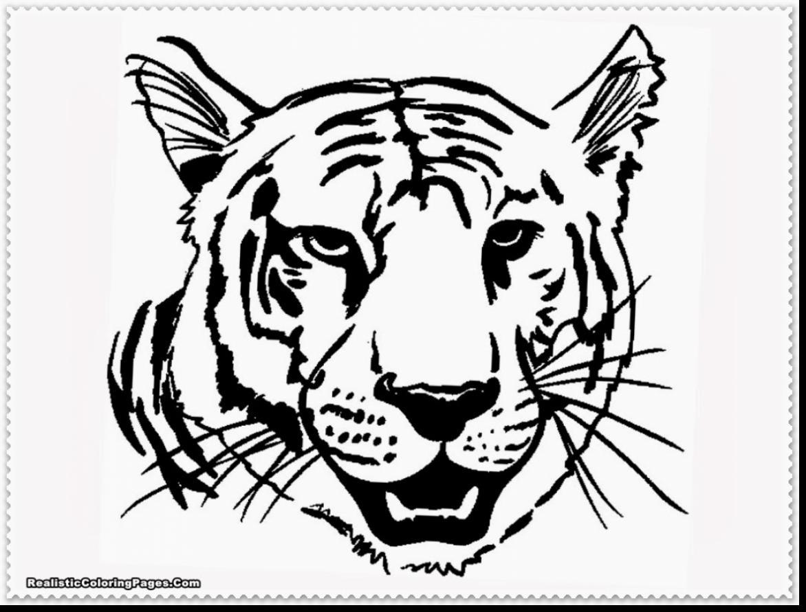 Tiger Roaring Drawing at GetDrawings