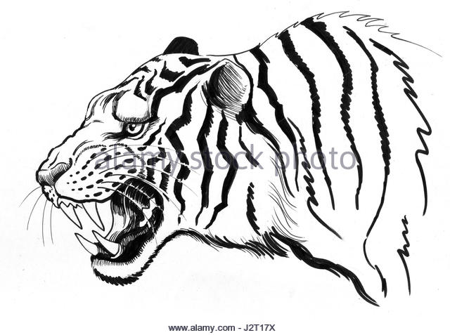 640x477 Paper Tiger Cut Out Stock Images Amp Pictures