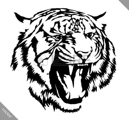 450x420 554 Black White Vector Tiger Stock Illustrations, Cliparts