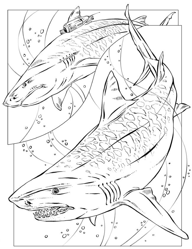 650x841 Free Printable Tiger Sharks By Richardkrumm