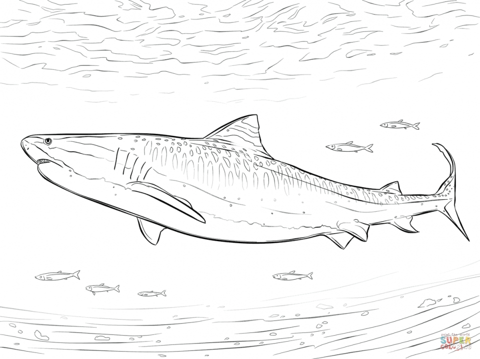 960x719 Get This Tiger Shark Coloring Pages 46721 !