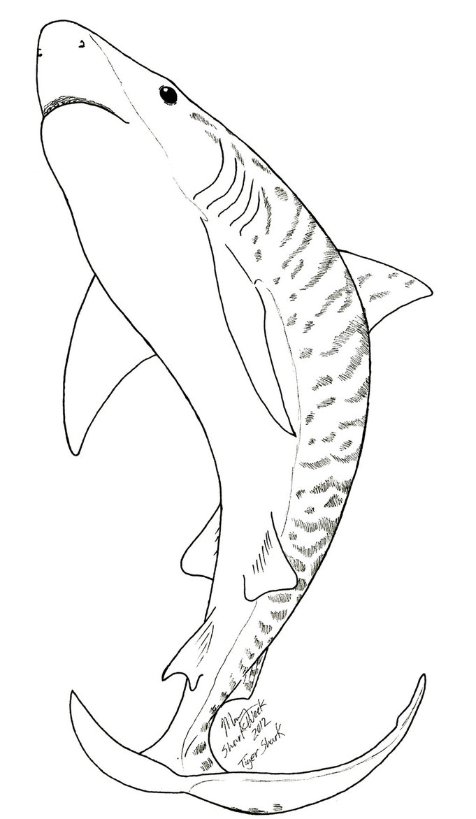681x1172 Tiger Shark Coloring Page Tattoos Coloring Pages
