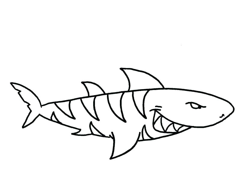 792x600 Tiger Shark Coloring Pages Drawings Hammerhead Shark Coloring