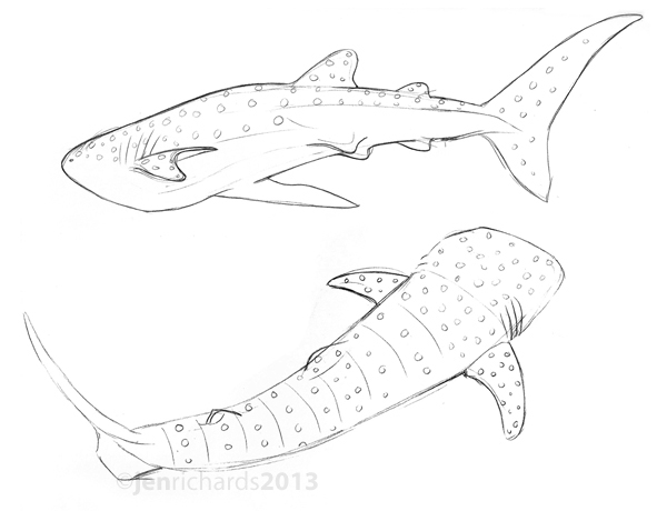 600x460 Sharks Jen Richards Page 2