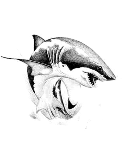 480x622 Classic Black Ink Shark Tattoo Design