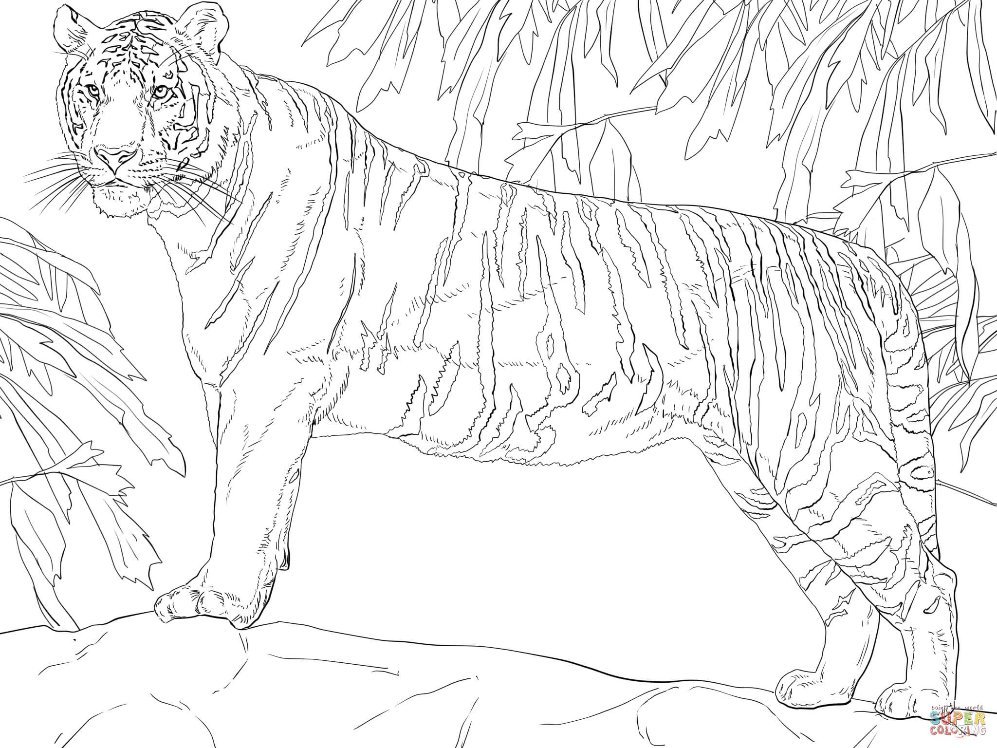 2048x1536 Tiger Tank Coloring Page Free Draw To Color
