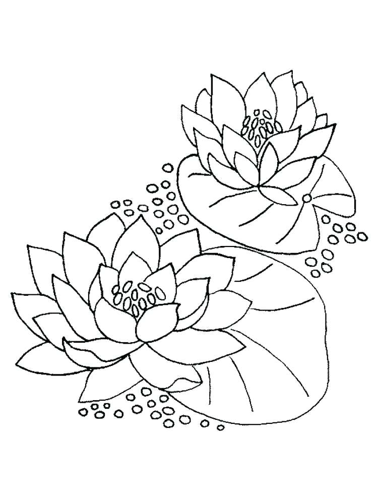 750x1000 Lily Flower Coloring Pages Water Lily Flower Coloring Pages