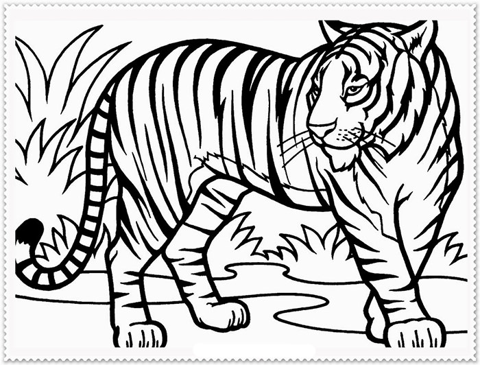 Tigers Drawing