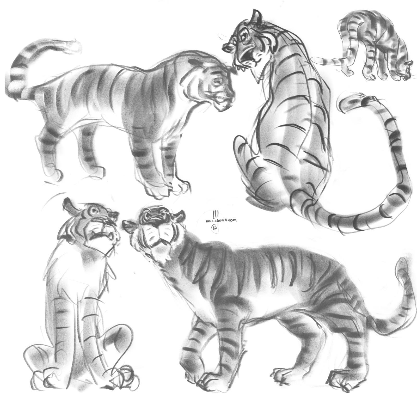 1600x1600 Gesture Drawings More Tigers