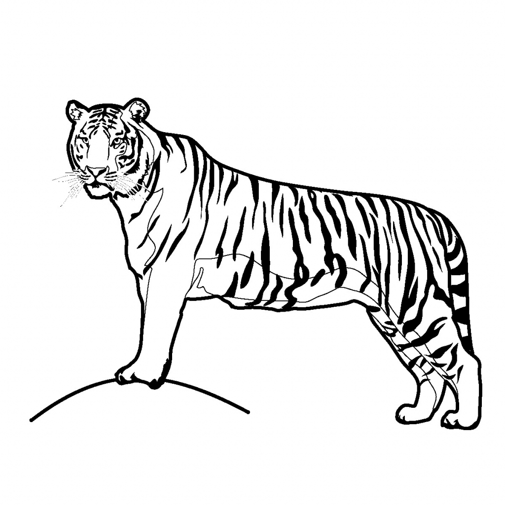 1024x1024 Simple Tiger Drawing