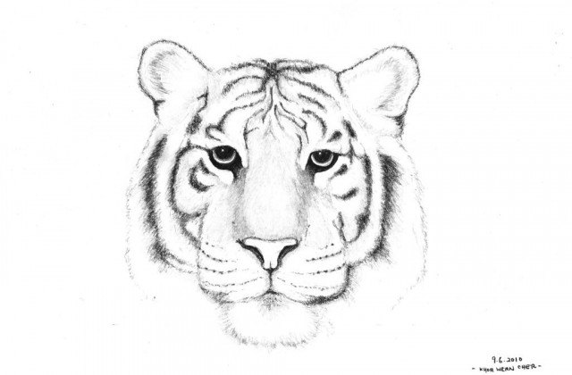 640x420 Tag For Easy Drawing Of A Tiger White Tiger By Bacafreak