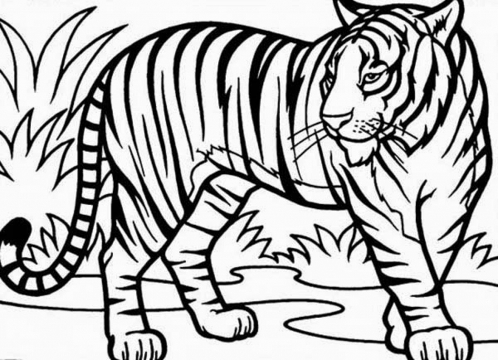 1024x740 Tiger Drawing For Kids Coloring Pages Of Tigers Barriee