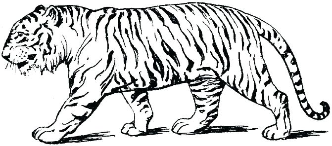 671x296 Unique Tiger Coloring Page Best Of Pages Tigers A Realistic