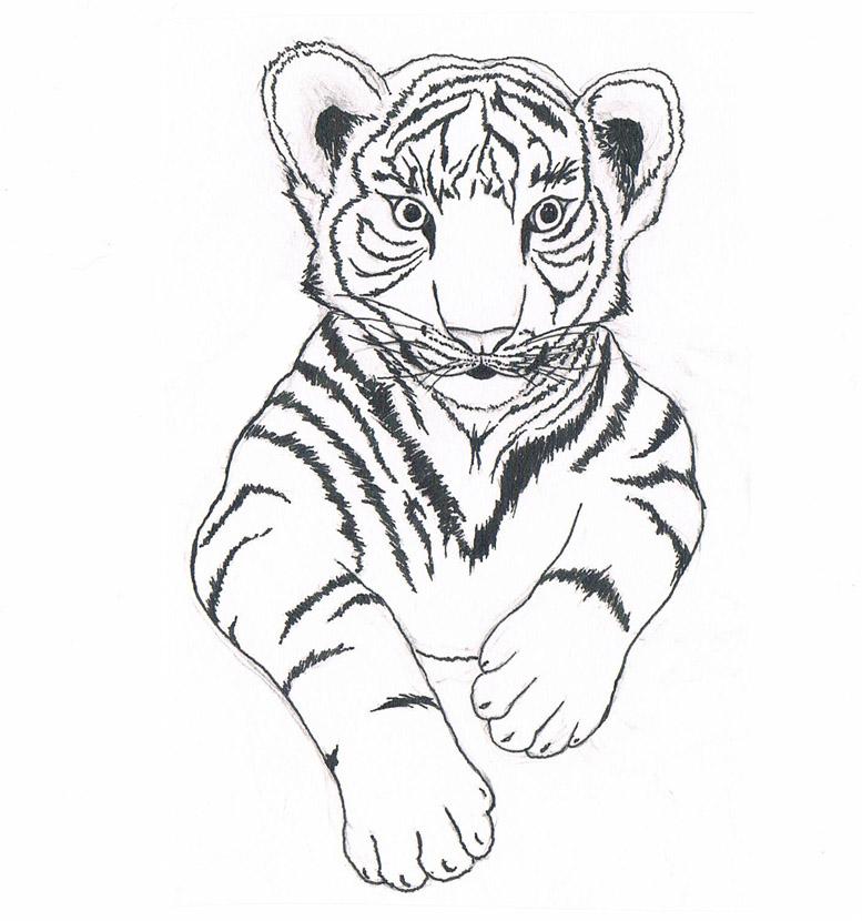 777x830 Baby Tiger By Unuspartum