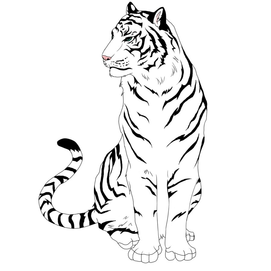 900x900 Baby White Tiger Face Coloring Drawings Easy