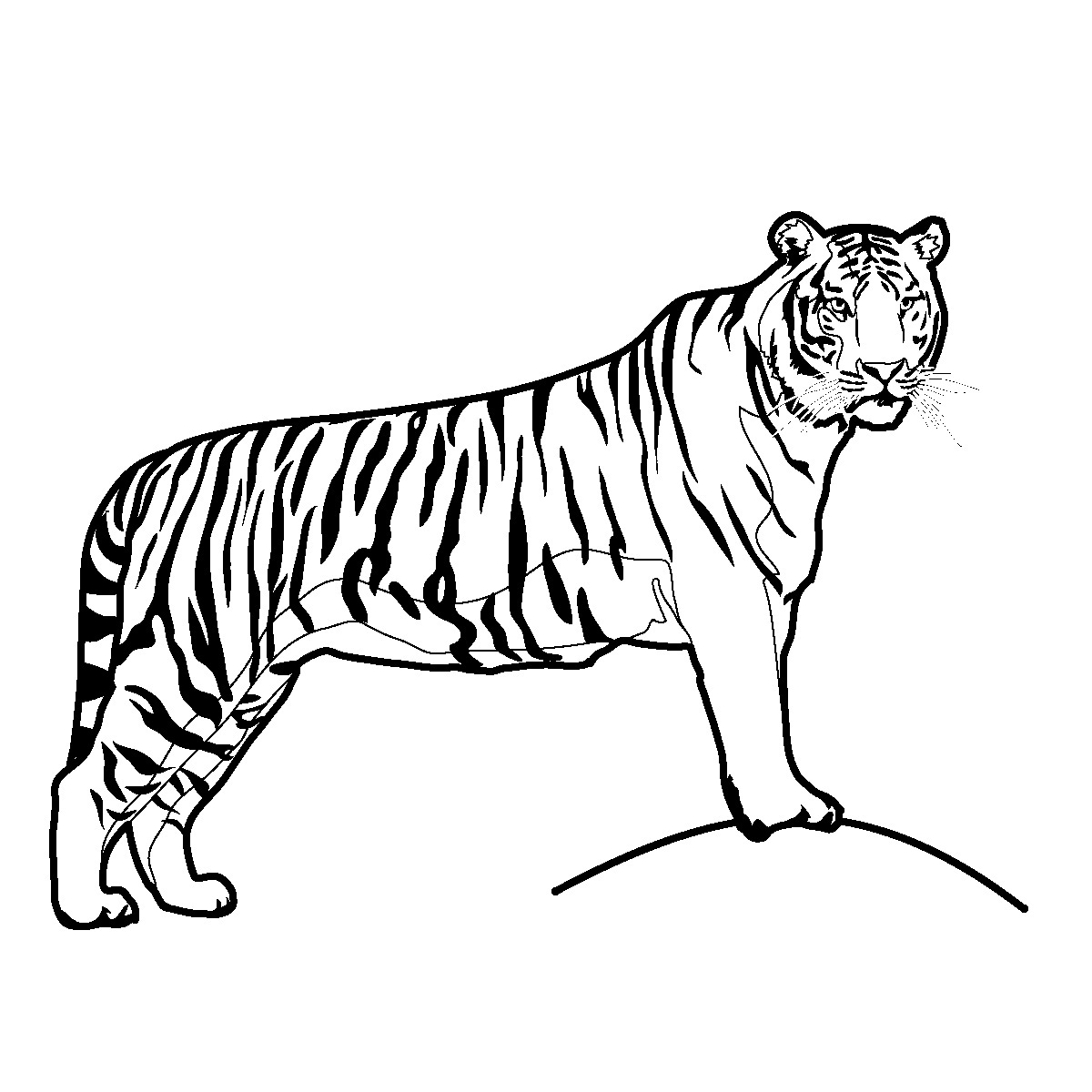 1200x1200 Drawing Of Tiger Pictures 7. How To Draw A Realistic Tiger