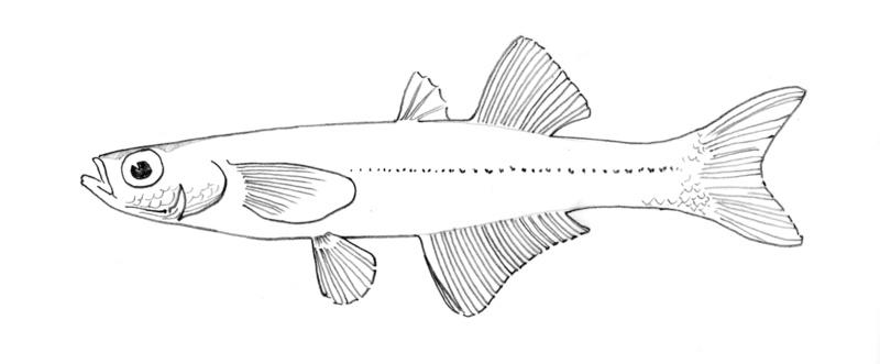 800x331 Fish